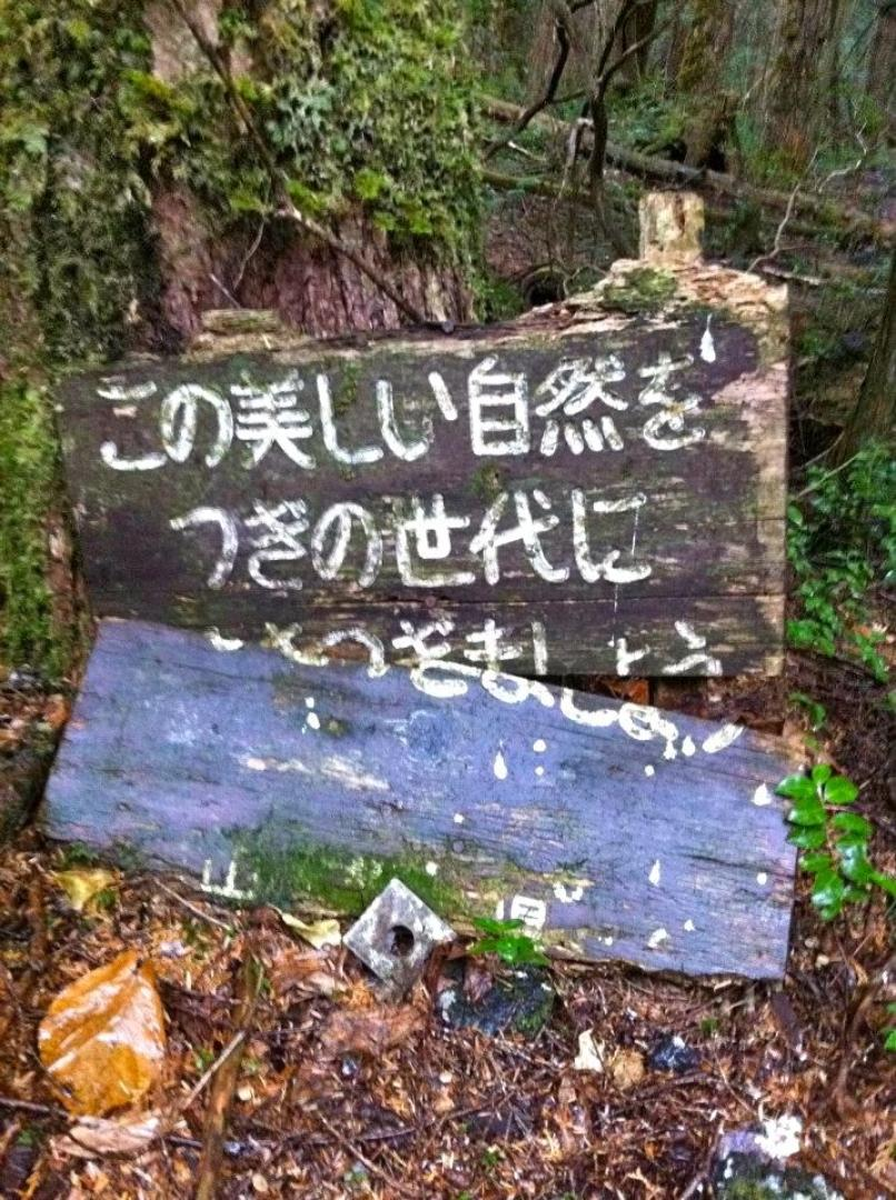 Aokigahara 2. kép