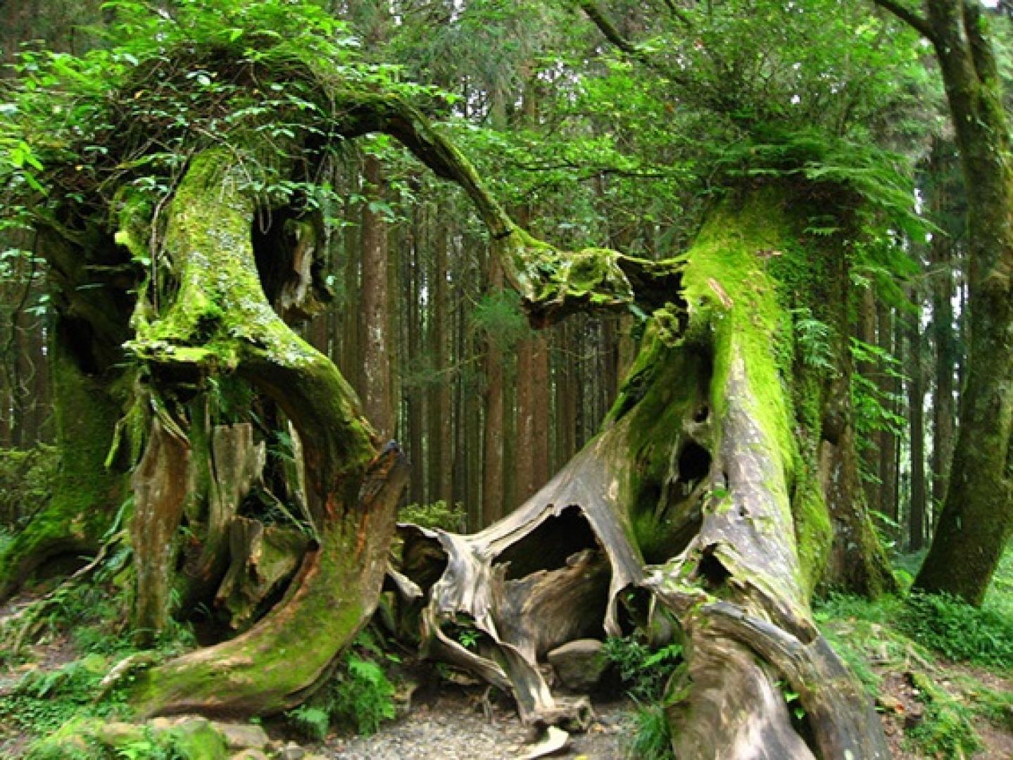 Hója-erdő 9. kép