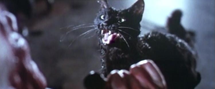 Gatto Nero - A fekete macska (1981) - Misztikus