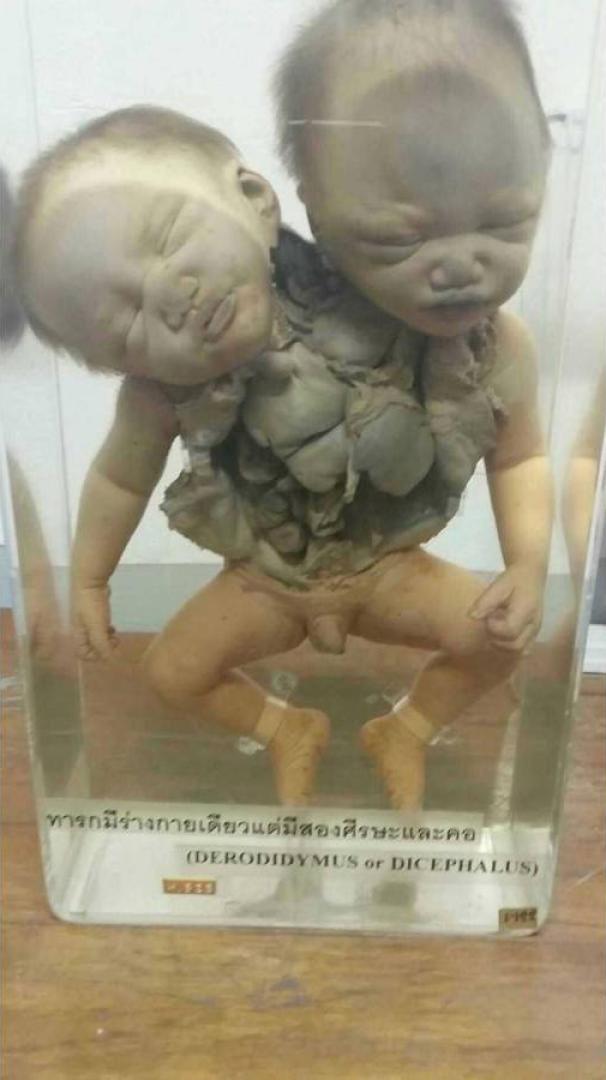 A Halál Múzeuma 10. kép