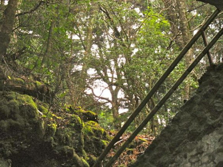 Aokigahara 1. kép