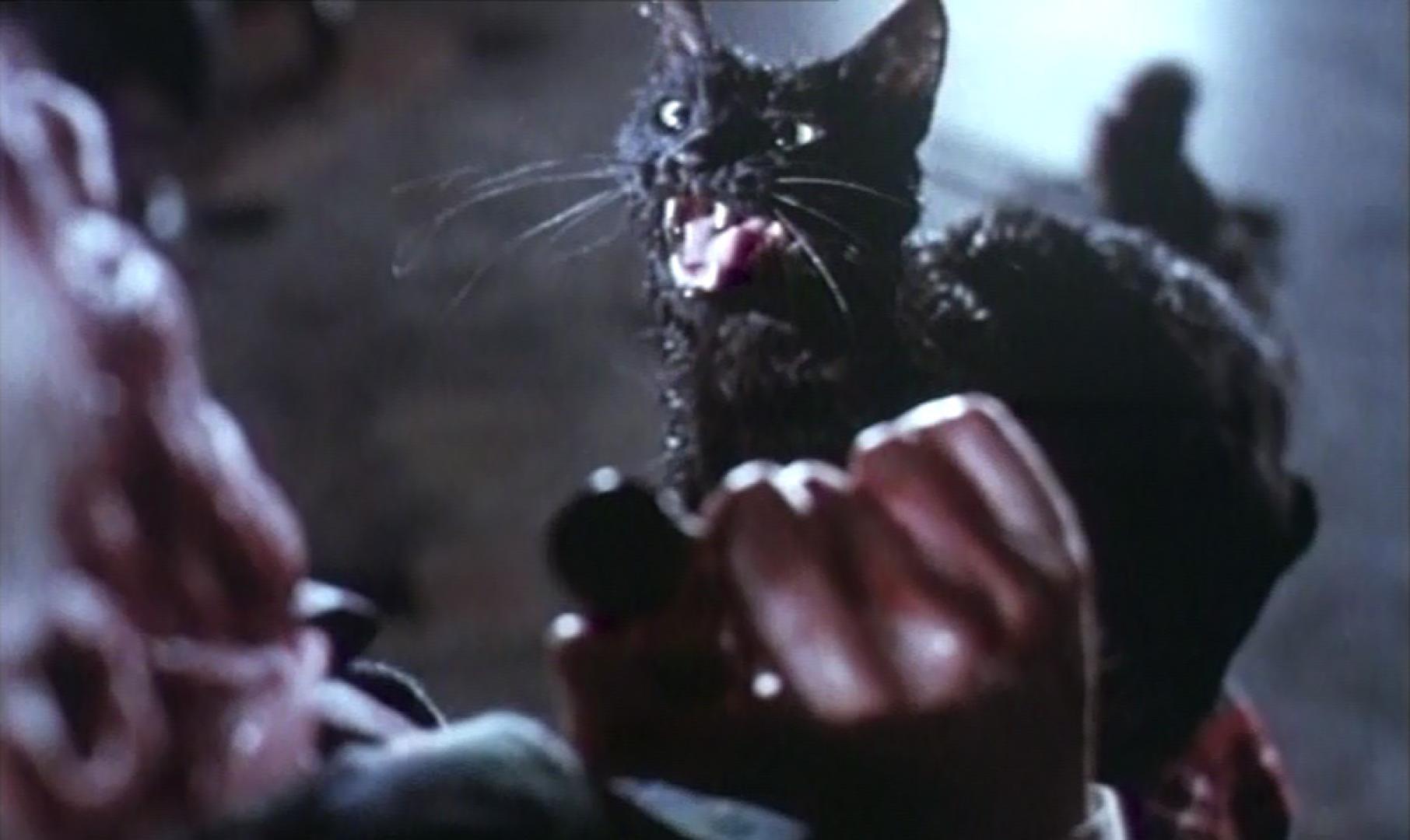 Gatto Nero - A fekete macska (1981) 2. kép