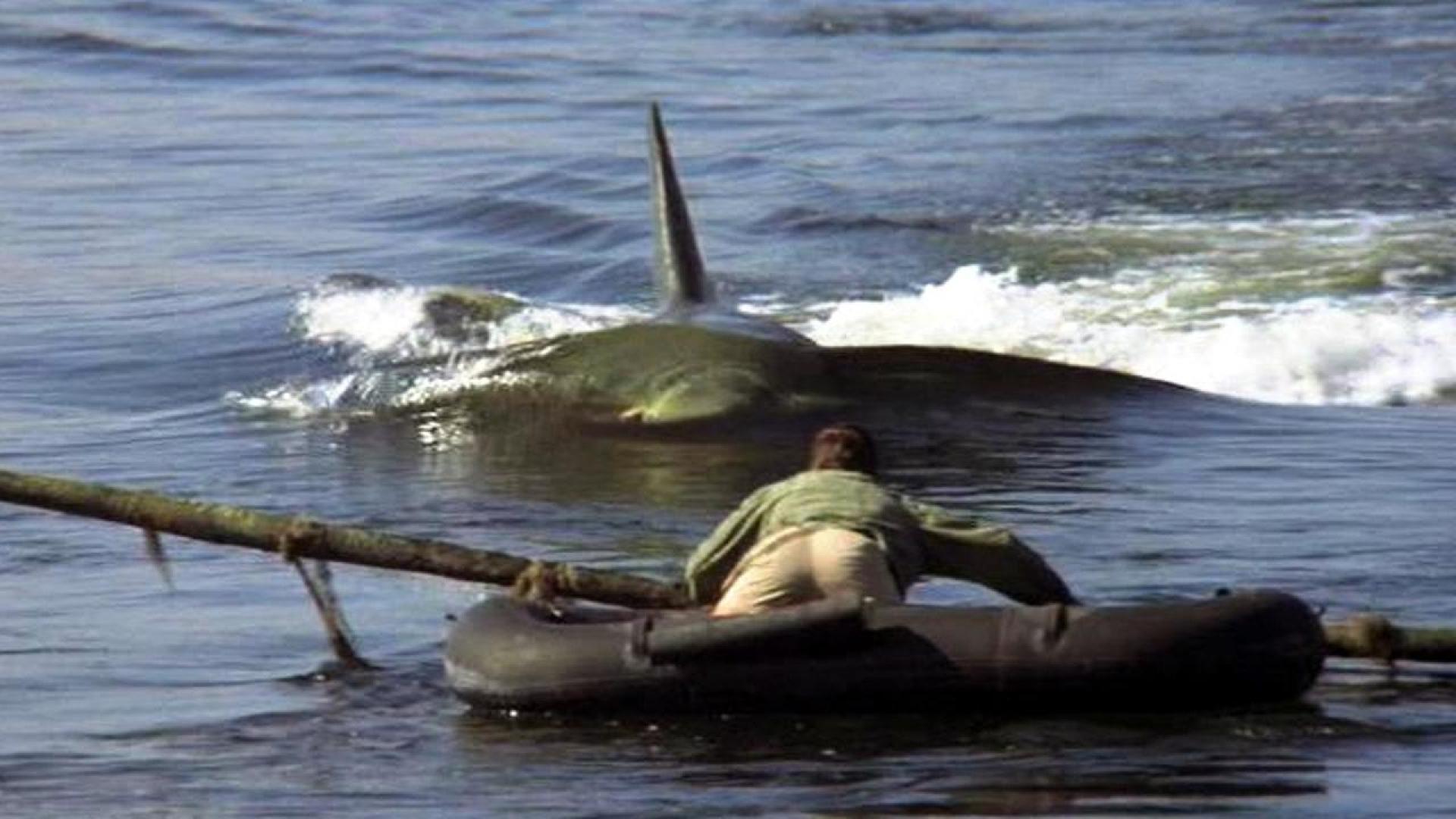 Jaws 2 - A cápa 2. (1978) 2. kép