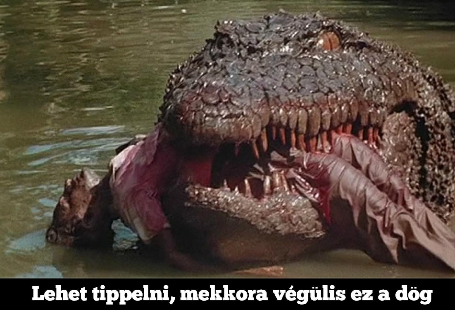 killerkroki_3_kep