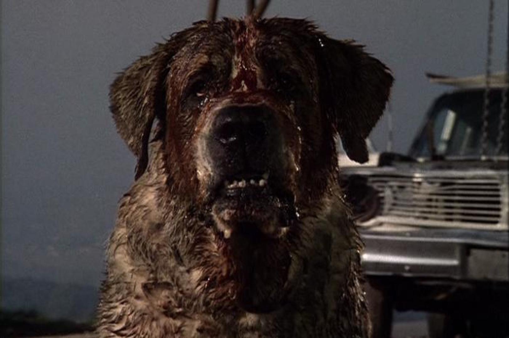 Stephen King: Cujo (1981/1983)