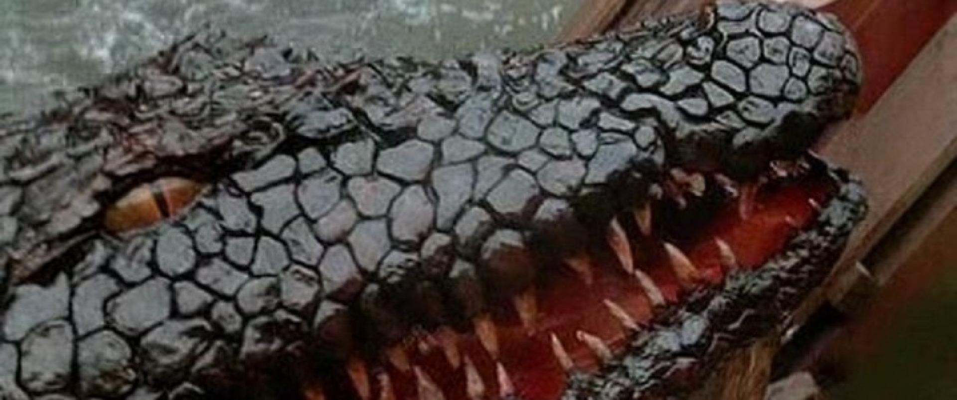 Killer Crocodile 2 - Gyilkos krokodil 2 (1990)