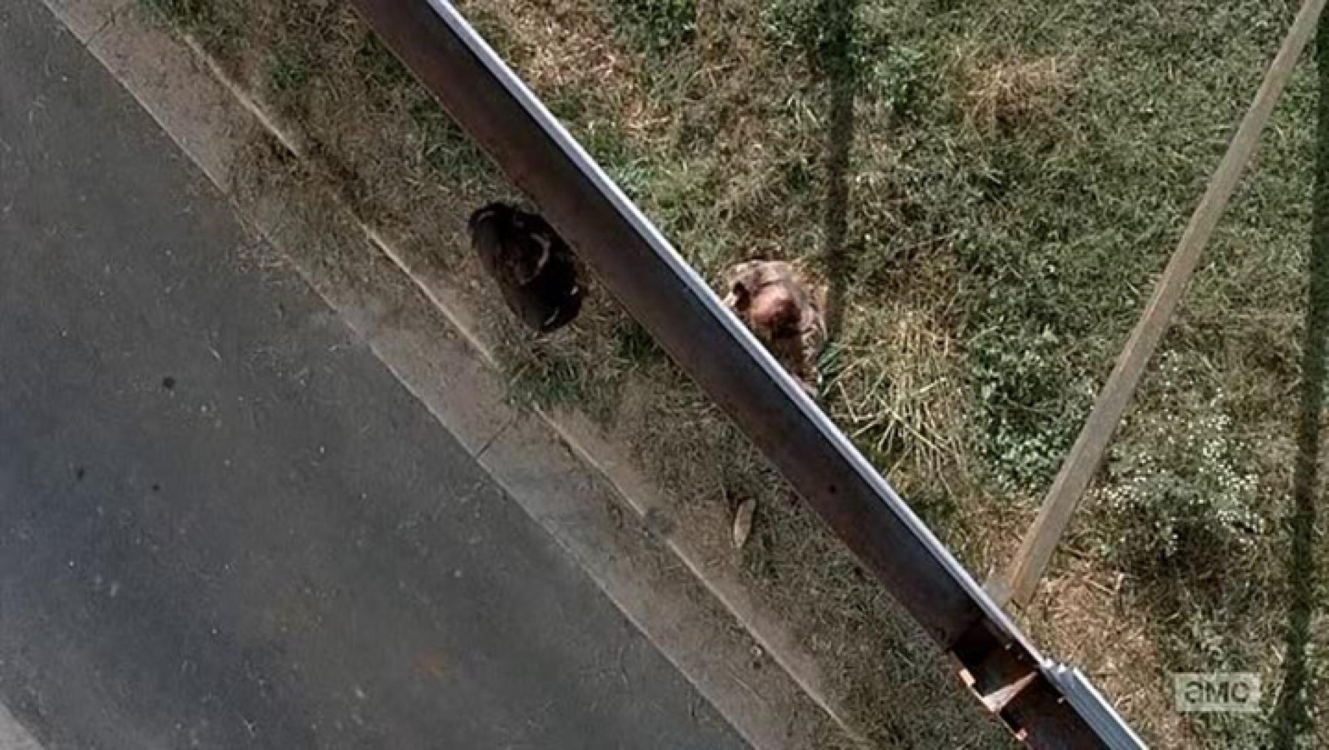 The Walking Dead 5x13 - Felejtés