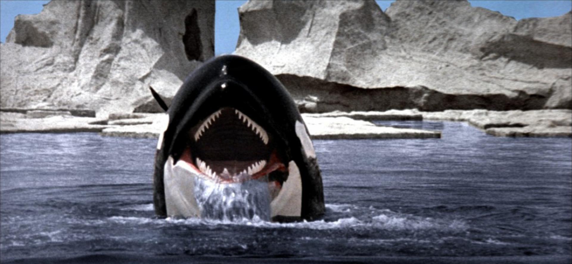 Orca - A gyilkos bálna (1977)
