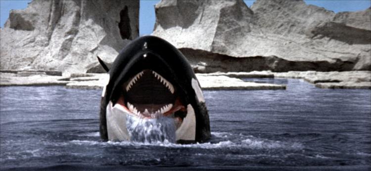 Orca - A gyilkos bálna (1977) - Természet