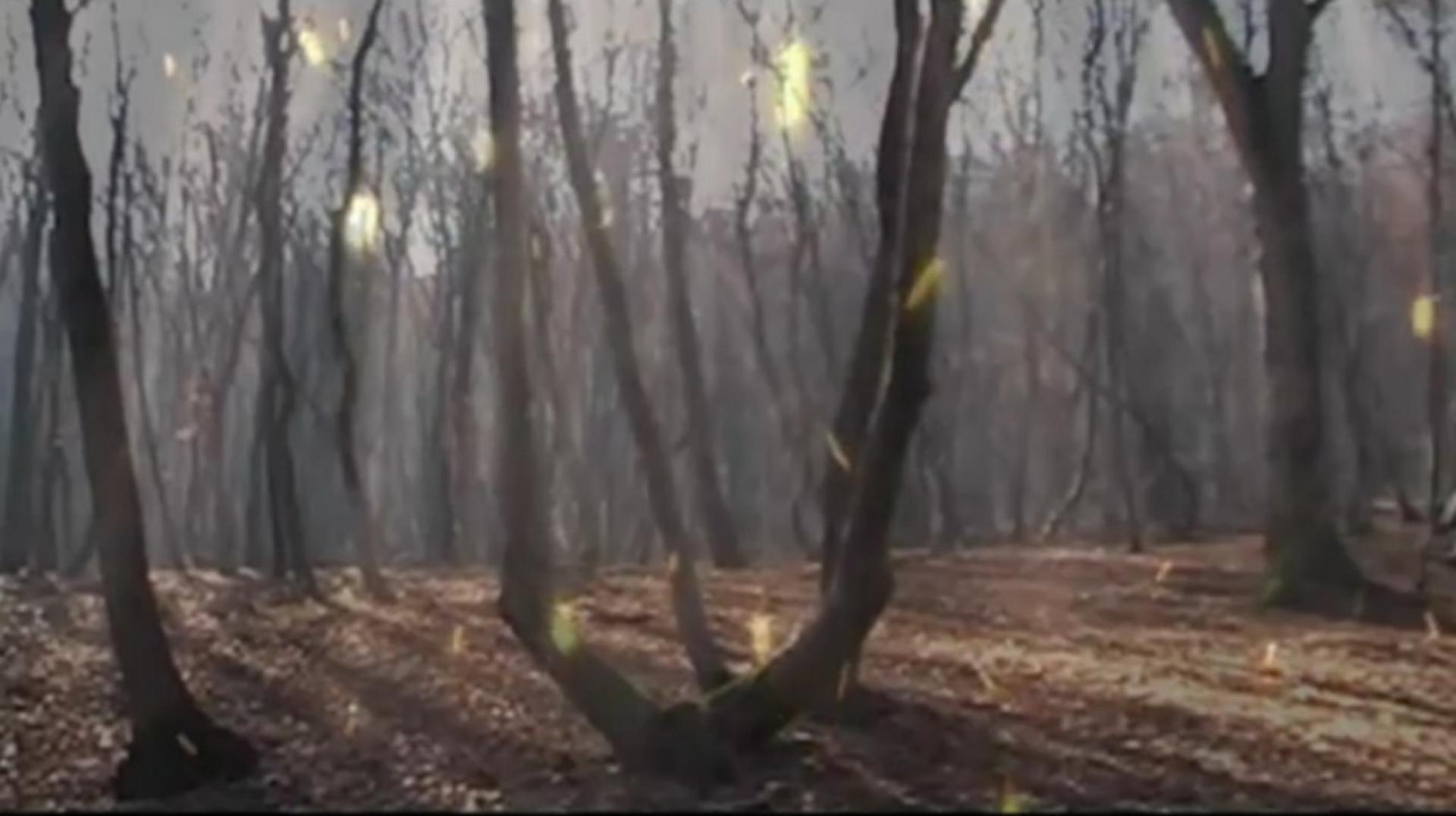Hója-erdő 8. kép