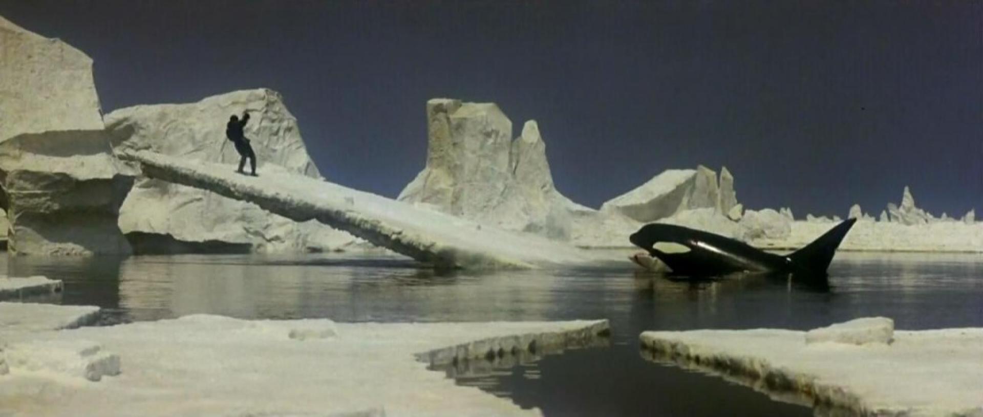 Orca - A gyilkos bálna (1977) 2. kép