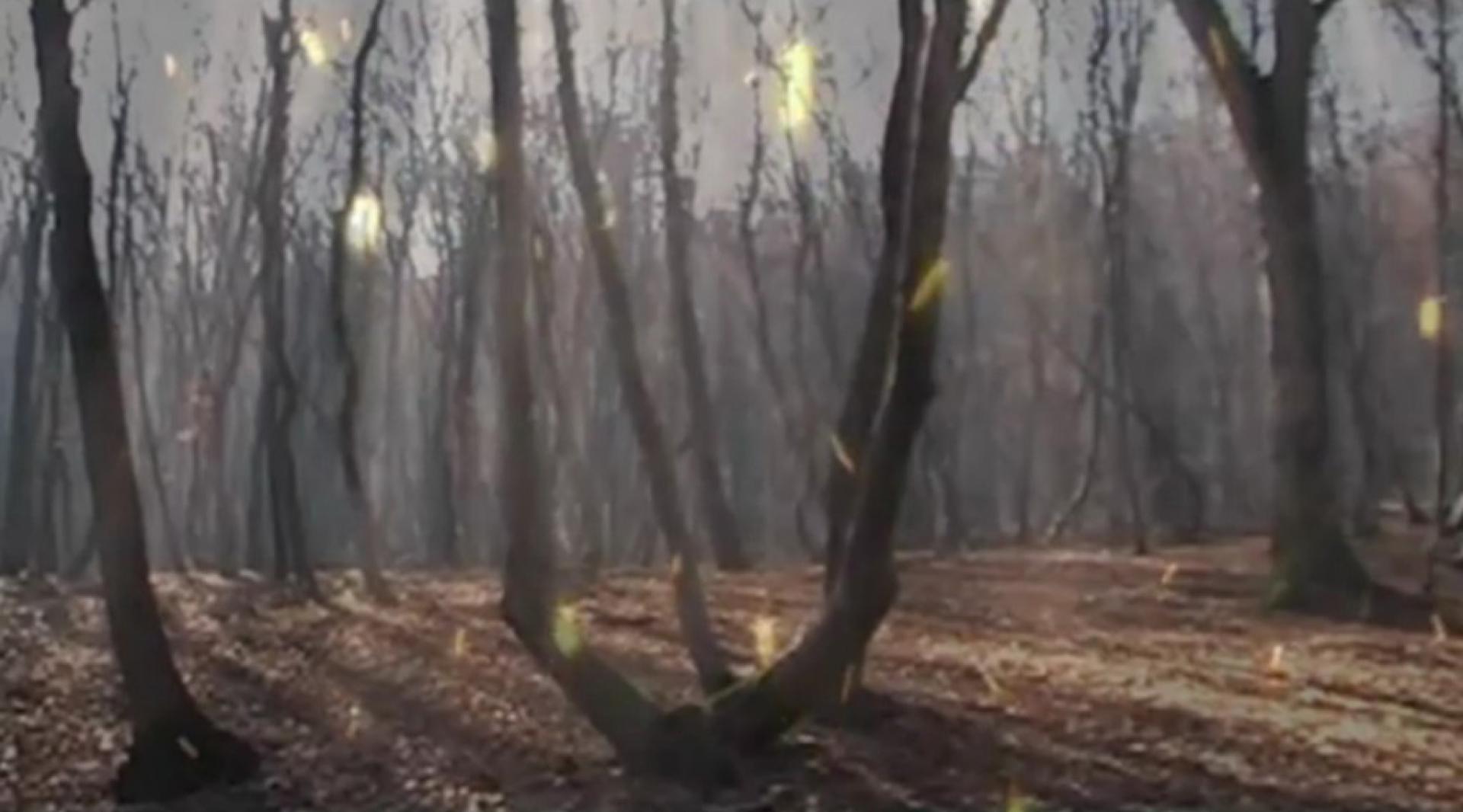 Hója-erdő