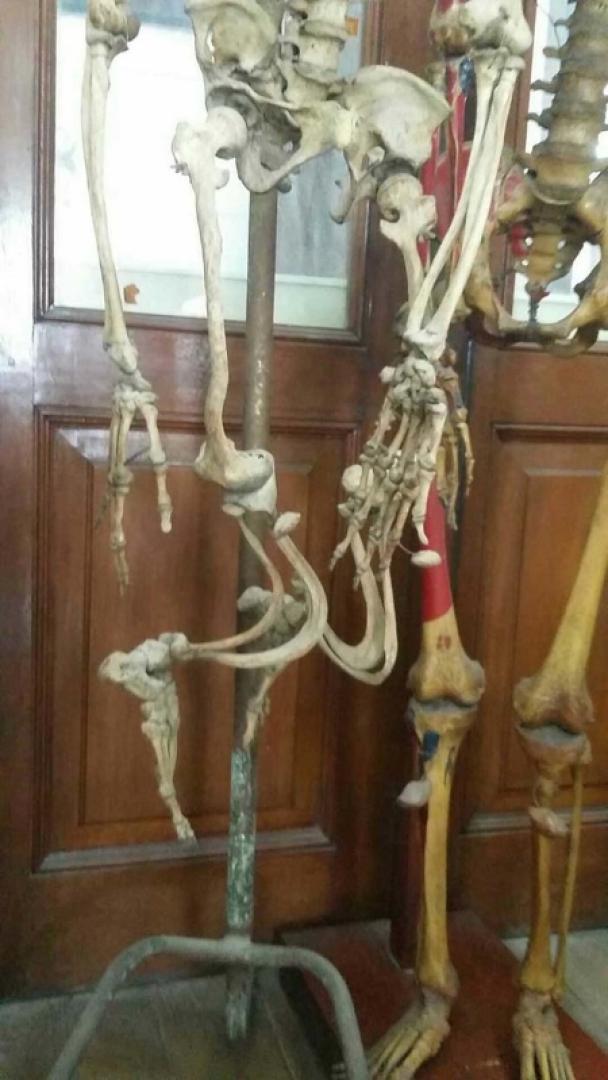 A Halál Múzeuma 1. kép