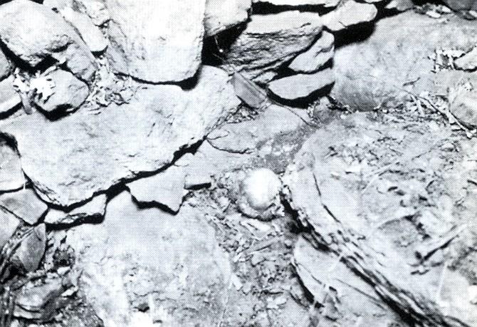 Albert Fish 2. kép